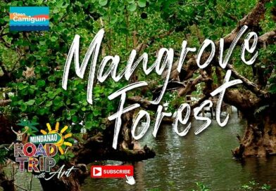 SIGHTS OF CAGAYAN DE ORO CITY & NORTHERN MINDANAO - CAMIGUIN - Mangrove Forest